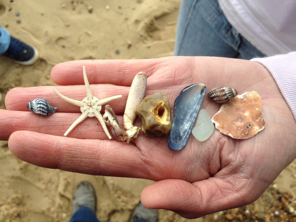 hidden beach treasures such as stones and shells held in the palm of  hand