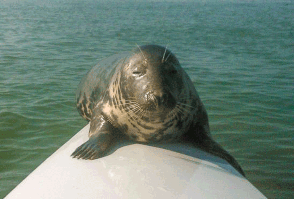 An image of a seal on a boat