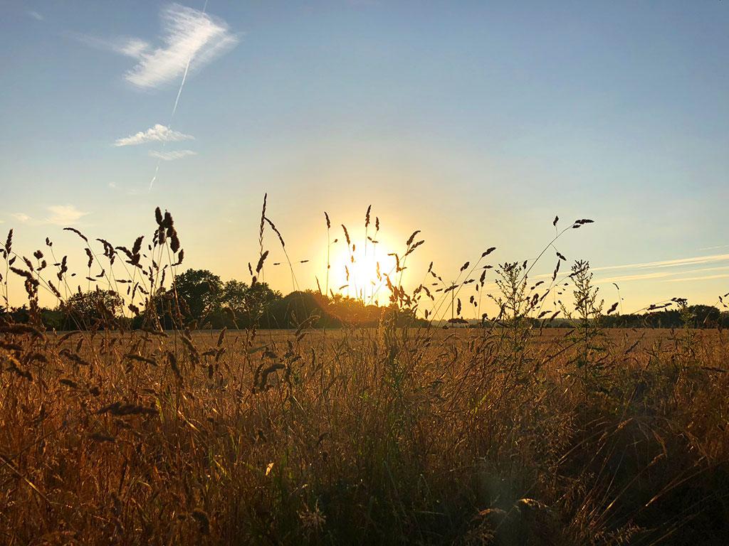 sunset - fields - woods