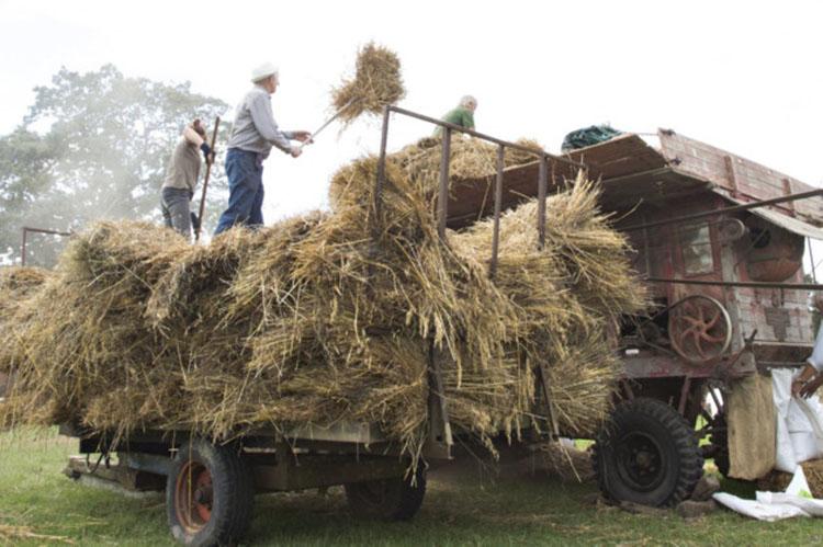 Threshing hay at Harvest Past