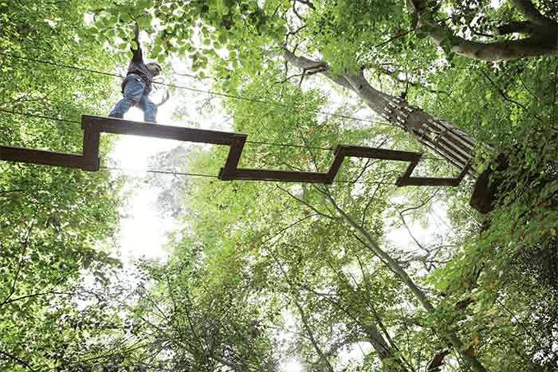 Go Ape at Thetford Forest