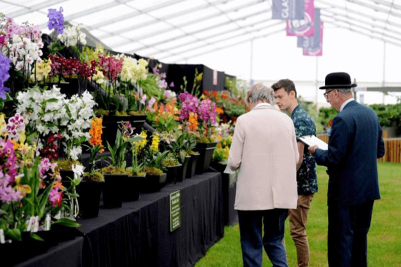 Suffolk Show Flowers