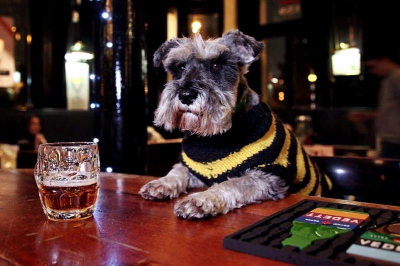 Pub Doggo
